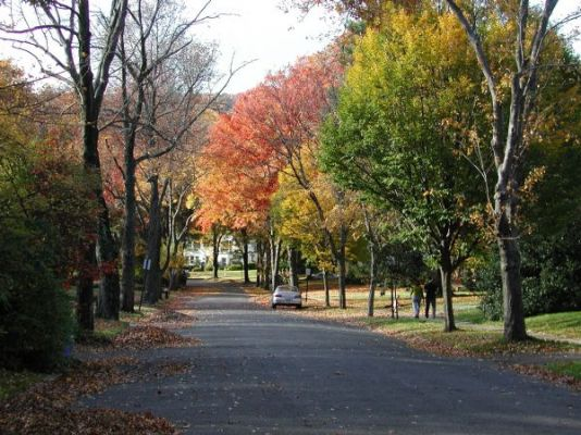Maplewood Fall Foliage
